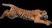 RAV Assault Vest Event;WELL L96 AWF Gun;MADBULL ACE Skeleton Stock (Black) Tiger